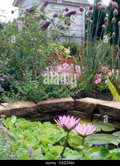 Gorgeous Lillies Stock Photos  Lillies Stock Images  Alamy With Luxury Water Lillies In Water Garden  Stock Image With Delightful Garden Trading Compost Bin Also Todmorden Garden Centre In Addition Landscaped Garden Ideas And Garden Grille As Well As Covent Garden Ski Shops Additionally Ebay Garden From Alamycom With   Luxury Lillies Stock Photos  Lillies Stock Images  Alamy With Delightful Water Lillies In Water Garden  Stock Image And Gorgeous Garden Trading Compost Bin Also Todmorden Garden Centre In Addition Landscaped Garden Ideas From Alamycom