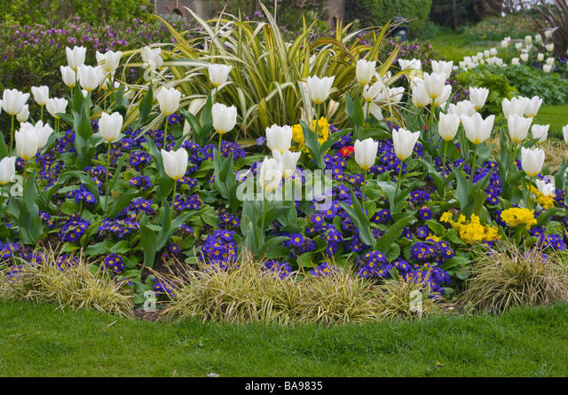 Primroses flower bed stock photos primroses flower bed for Ornamental trees for flower beds