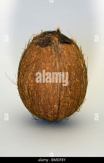 Coconut seed stock photos coconut seed stock images alamy for Whole coconut bird feeders