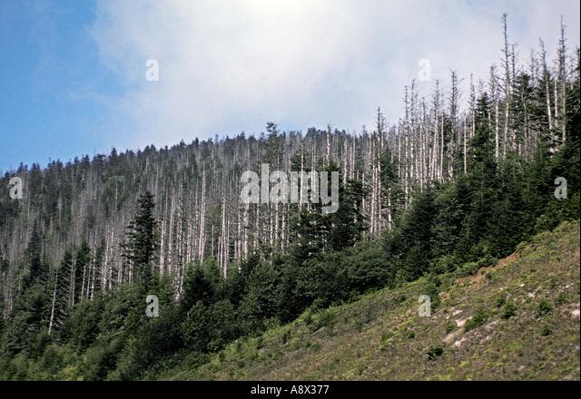 Acid Rain Stock Photos & Acid Rain Stock Images - Alamy
