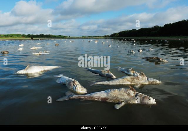 Ugly fish stock photos ugly fish stock images alamy for Deep sea fishing corpus christi