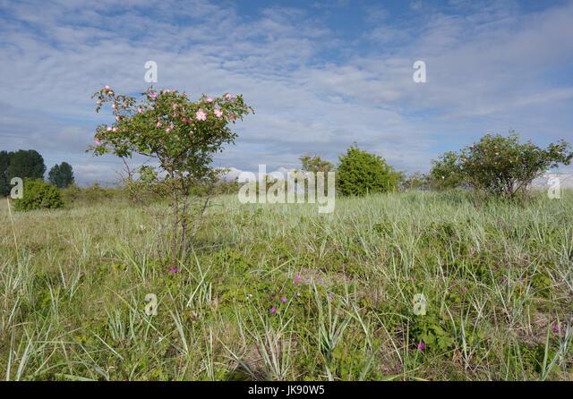 Landscape on Manija island. Manilaid Estonia 9th July 2017 - Stock Image