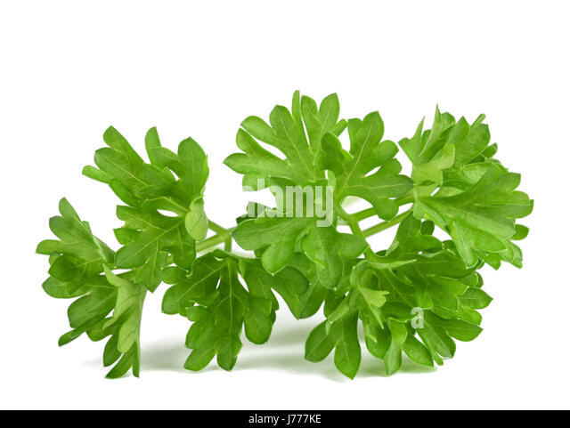 Curly Parsley Stock Photos & Curly Parsley Stock Images ...