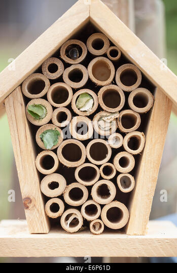 Bug Box Stock Photos Amp Bug Box Stock Images Alamy