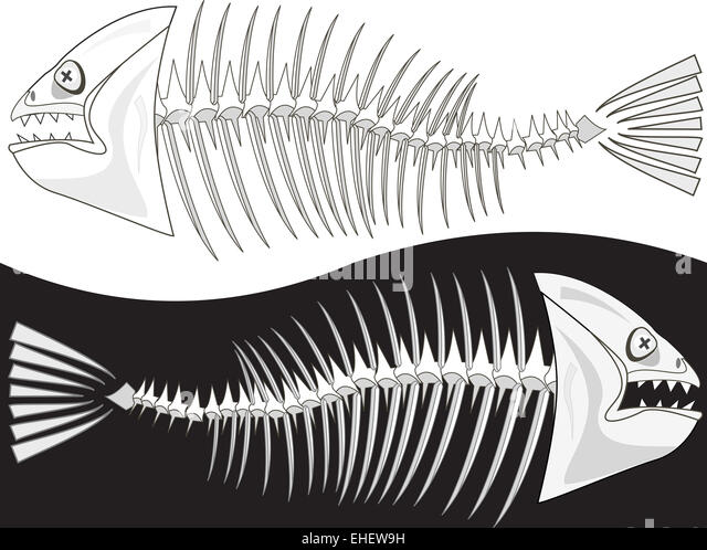 Fish skeleton illustration stock photos fish skeleton for Fish without bones