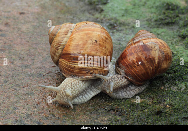 Types Of Edible Snails: Land Snails – Billy Knight