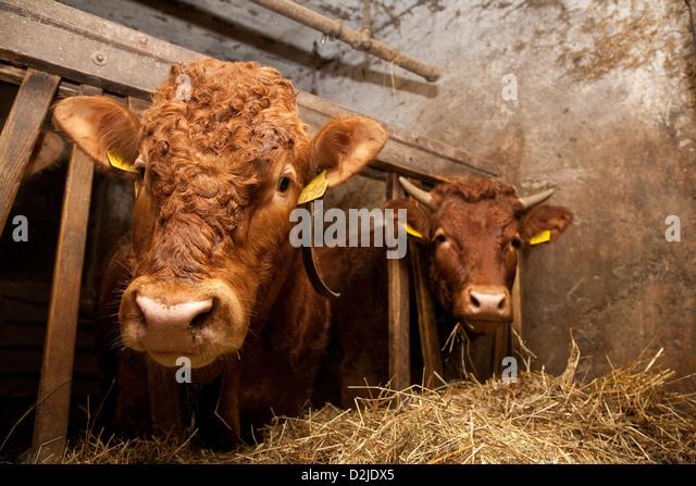city bull riedlingen