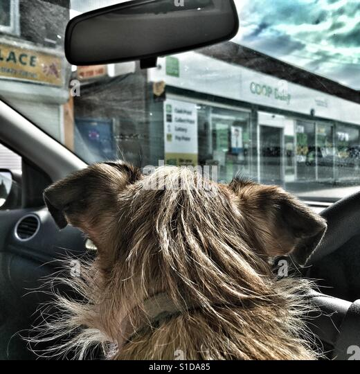dog looking out of car window stock photos amp dog looking