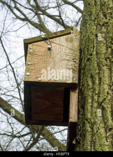 Bat tree uk stock photos bat tree uk stock images alamy for Bat box obi