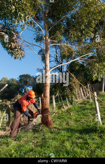 Tractor Man On Cutting Trees : Branch cutting equipment stock photos