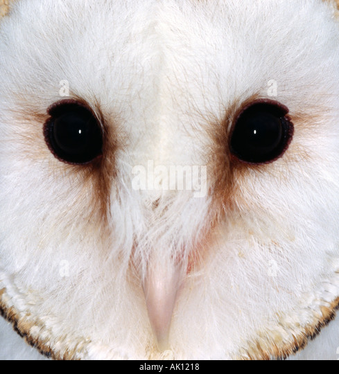 bird parliment essay A parliament of owls friday and the owls' parliament in her essay owls, mary oliver writes of her search for the birds in not this bird with the glassy.