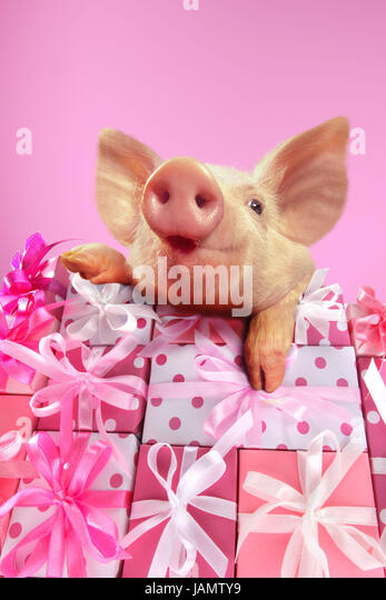 Gift Mountain,piglet,portrait,Christmas,Valentinstag,birthday,Motheru0027s Day,