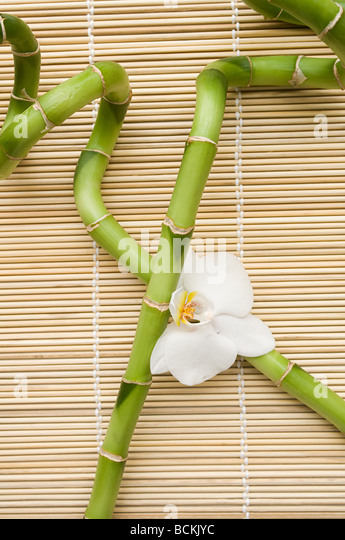 lucky bamboo and orchid flower stock image