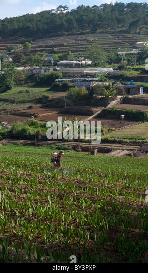 Dalat Vietnam Stock Photos Amp Dalat Vietnam Stock Images