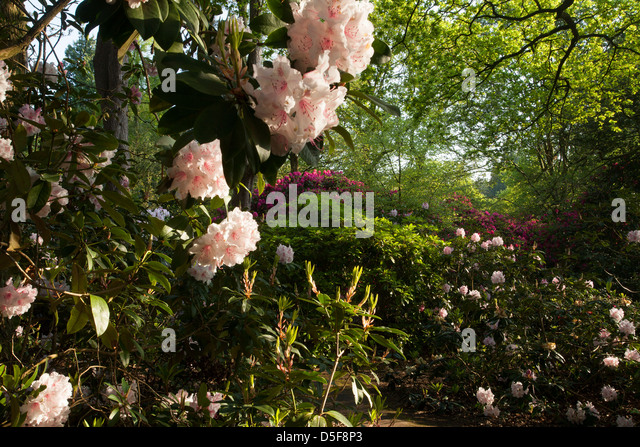 Victorian flower garden stock photos victorian flower for Victorian garden trees