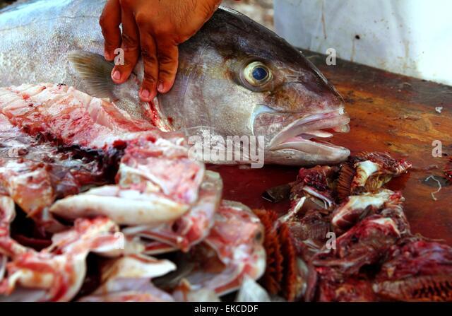 Big amberjack stock photos big amberjack stock images for Amberjack fish recipes