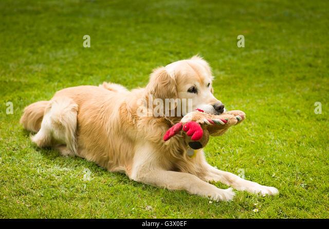 Dog Toy Fishing Retreiver