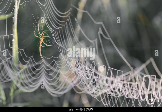 ww web dew