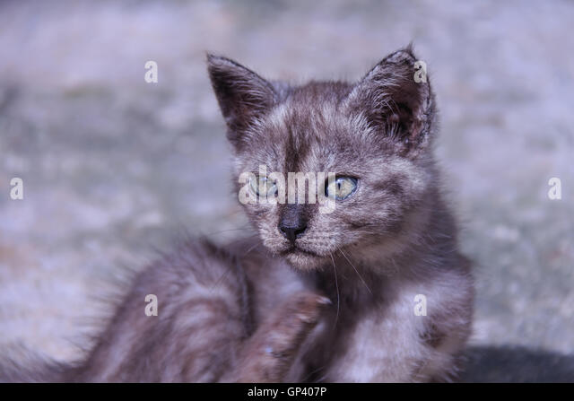 the characteristics of the siberian lynx a mammal from the family of felidae The main felidae characteristic is that wild cats are obligate carnivores many of  the wild cat physical characteristics are adaptations to enable.
