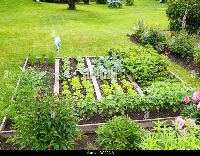 Lettuce patch stock photos lettuce patch stock images for Vegetable patch in small garden
