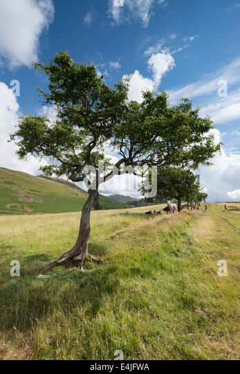 Small tree big roots stock photos small tree big roots for Small hardy trees