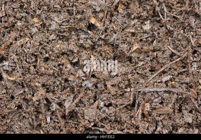 Composting Wood Chips Bark And Leaves To Use As A Garden Mulch.   Stock  Image