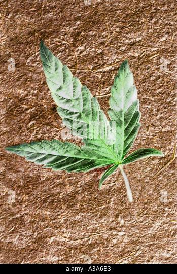 Cafe Feuille De Marijuana
