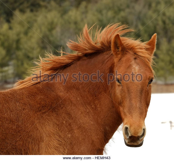 long manes stock photos - photo #24