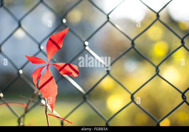 Metal Leaves Fence Stock Photos & Metal Leaves Fence Stock Images ...
