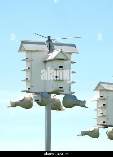 purple martin birdhouses stock image - Purple Martin Houses