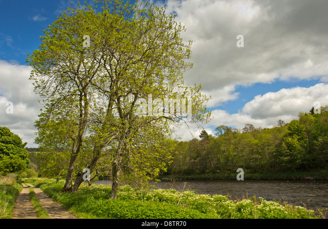 Autumn Leaves Flowing In September Rain >> River Spey Scotland Stock Photos & River Spey Scotland Stock Images - Alamy
