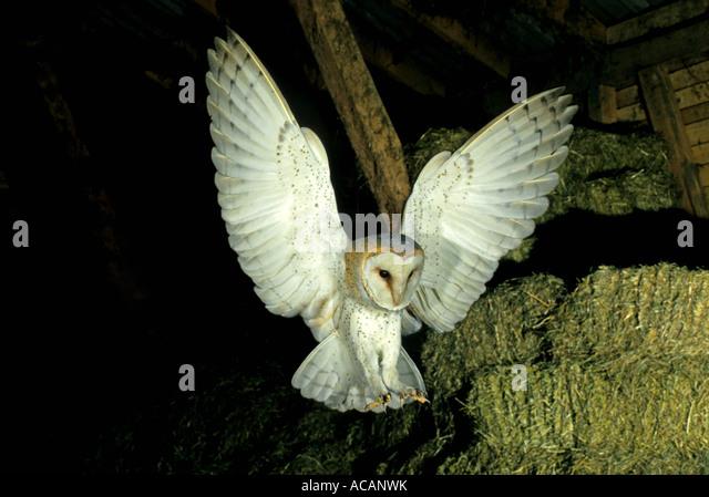 sexkino bergisch gladbach hobbyhure owl