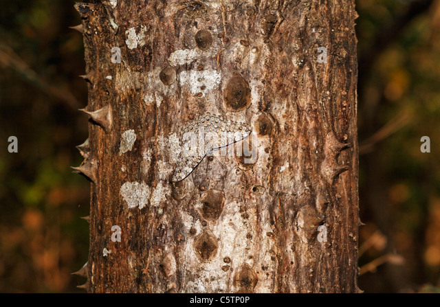 Camouflage Butterfly Stock Photos & Camouflage Butterfly ...