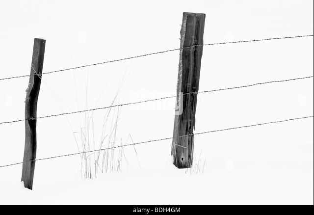 Barbed black and white stock photos images alamy for Enemy tattoo everett