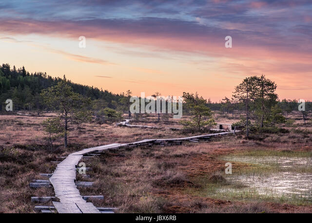 Scenic landscape at summer night in the swamp, National Park, Torronsuo, Finland. - Stock Image