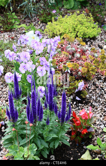 Unusual Alpine Garden Rockery Stock Photos  Alpine Garden Rockery Stock  With Gorgeous Rock Garden Alpine Garden  Stock Image With Comely Wide Garden Gate Also Sunshine Garden In Addition Soundproof Garden Studio And Raphael Hatton Garden As Well As Roots Garden Centre Hermitage Additionally How To Be A Gardener From Alamycom With   Gorgeous Alpine Garden Rockery Stock Photos  Alpine Garden Rockery Stock  With Comely Rock Garden Alpine Garden  Stock Image And Unusual Wide Garden Gate Also Sunshine Garden In Addition Soundproof Garden Studio From Alamycom