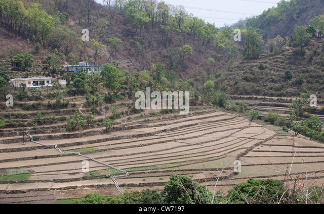 Terracing farming stock photos terracing farming stock for Terrace farming in india