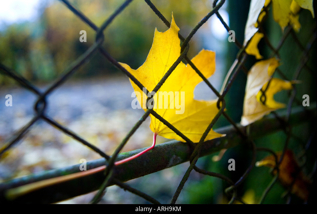 Rotten Fence Stock Photos & Rotten Fence Stock Images - Alamy