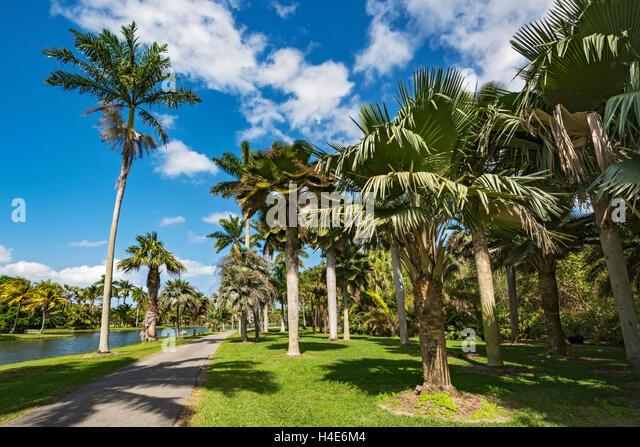 Florida Tropical Palm Trees Stock Photos Florida Tropical Palm Trees Stock Images Alamy