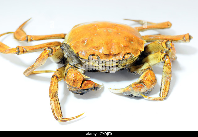 Hairy Crab Stock Photos & Hairy Crab Stock Images - Alamy