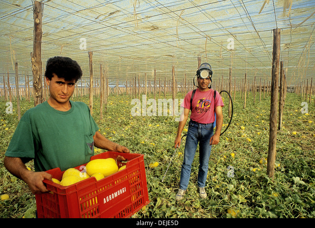 http://l7.alamy.com/zooms/39447c255b484948947cc6c49d6da3b6/maghribian-workers-in-the-greenhouses-el-ejido-almera-province-spain-deje5d.jpg