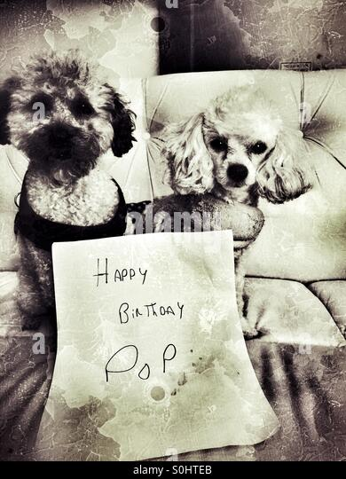 Birthday Wishes From The Dogs Stock Photo 310179027