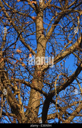 Gradation Sky Blue Stock Photos & Gradation Sky Blue Stock ...