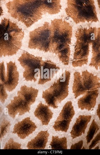 Furry Stock Photos Amp Furry Stock Images Alamy