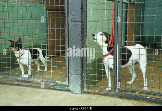 Rehoming A Dog Chichester Uk