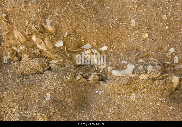 Calcarenite Rock Stock Photos & Calcarenite Rock Stock ...