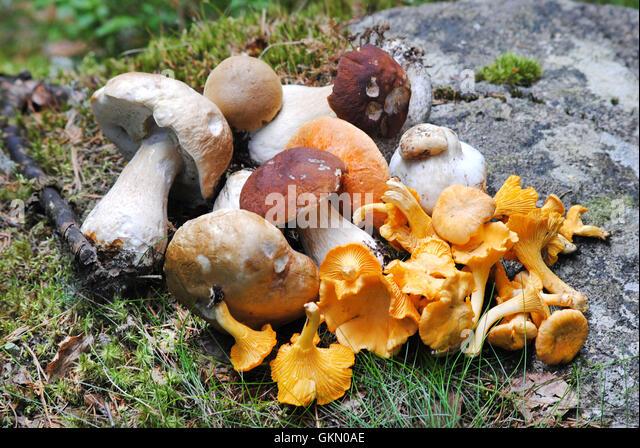 Fungiform Stock Photos & Fungiform Stock Images
