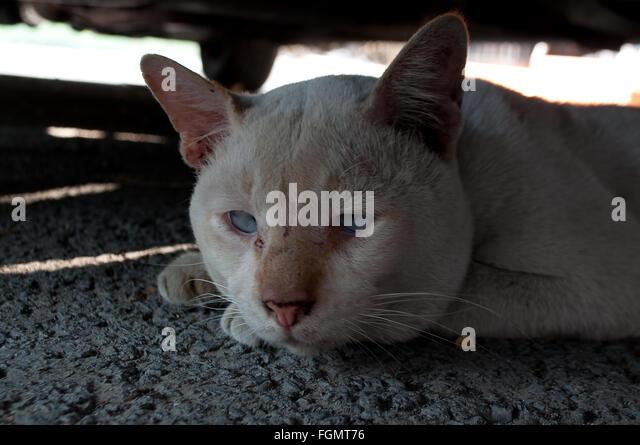 lonely sad cat - photo #16