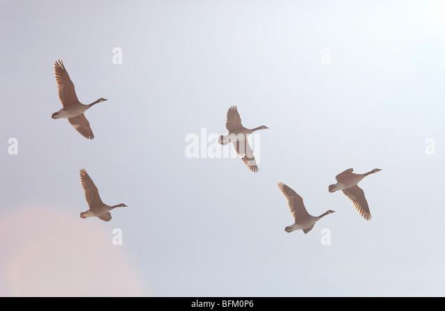 canada goose a aix en provence