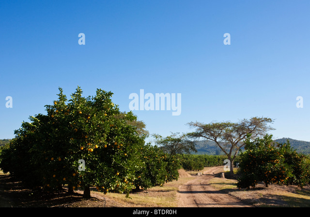 African orchard stock photos amp african orchard stock images alamy